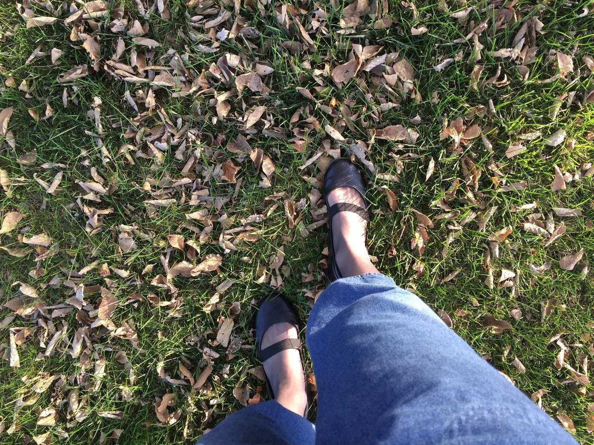 Joie d'automne : sortie au parc
