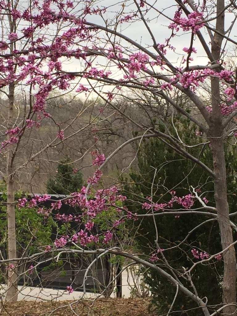printemps dans le Nebraska