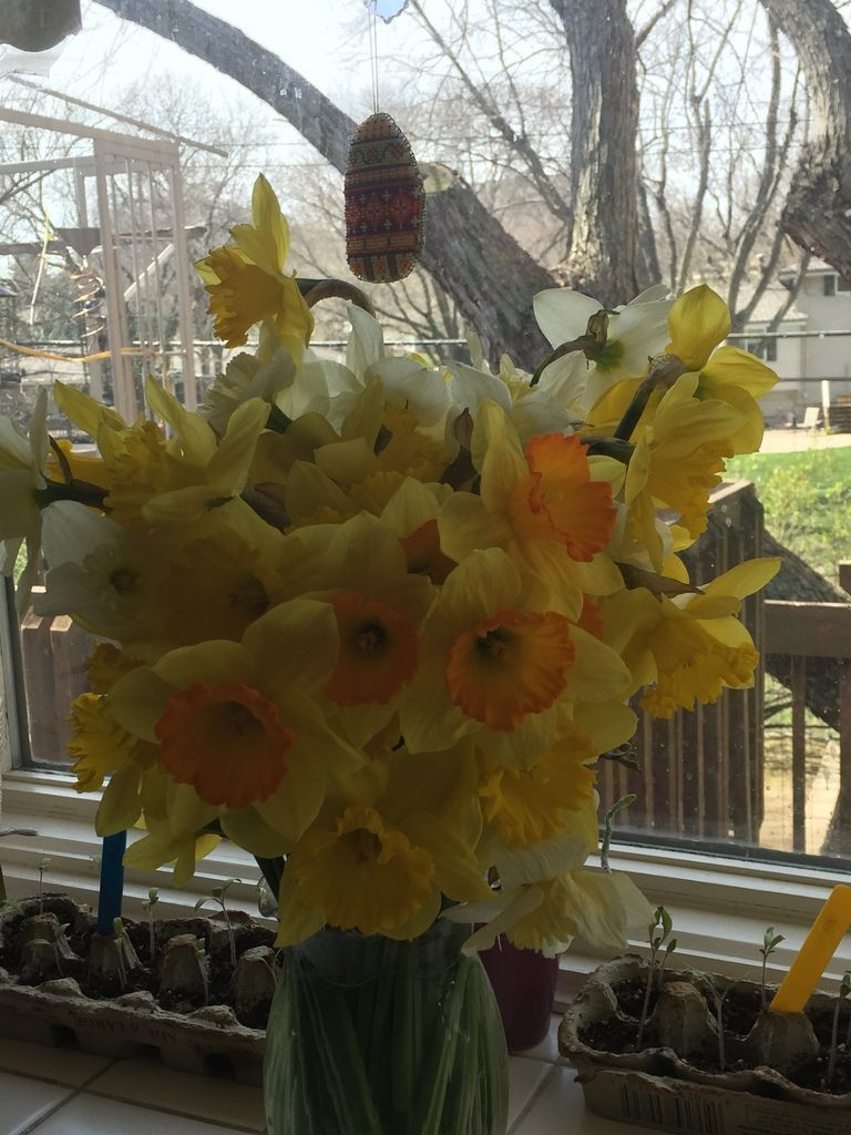 Jonquilles du jardin, bouquets et photos de tite lutine