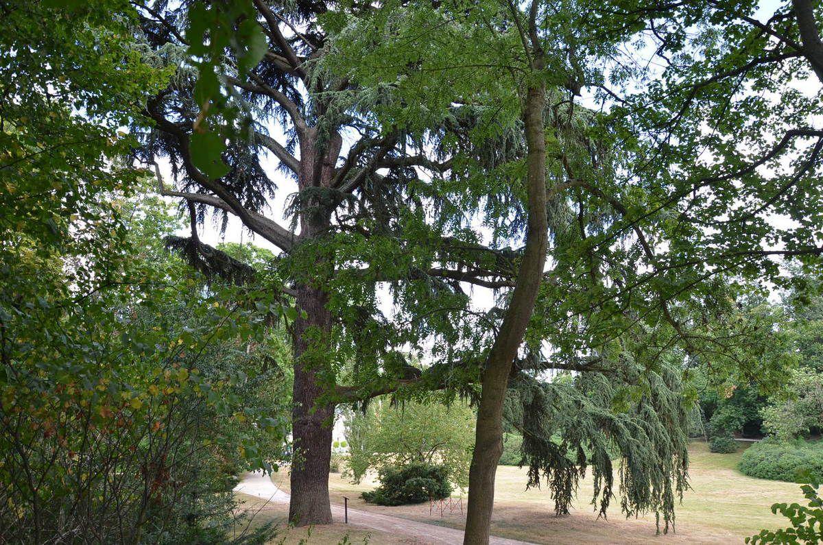 La Vallée-aux-Loups - Chateaubriand botaniste