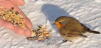 L'hiver des poètes