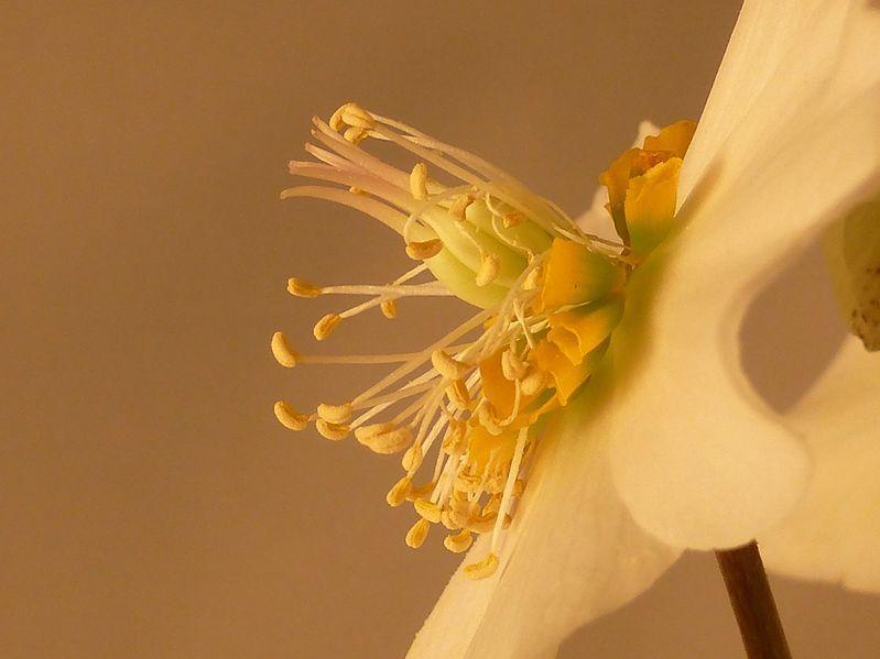 Fleurs d'Hiver ....