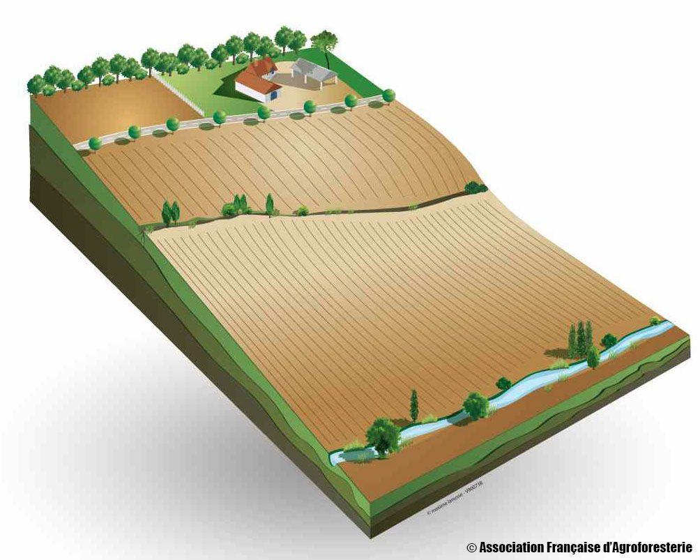 Présentation de l'agroforesterie : les pratiques agricoles qui intègrent l'arbre - Vidéo