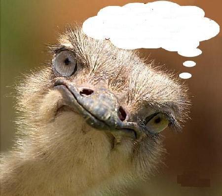 On s'interroge sur le mutisme des autruches. On dit qu'elles ne communiquent guère car leurs cordes vocales seraient atrophiées. Cependant, si on les fréquente de temps en temps (à Sigean par exemple), on constate qu'elles peuvent accompagner les contacts sociaux de toute une gamme de sons et de claquements de bec qui viennent à l'appui de diverses parades et postures, dont les plus agressives s'assortissent de déploiements arrogants de plumes et de battements d'ailes.