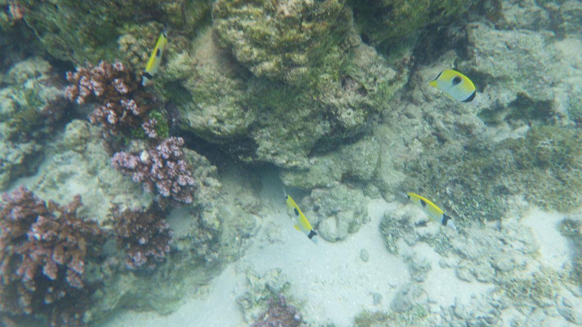 Ernest à Bora Bora..