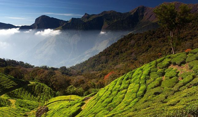 Paysage du Kerala (Inde). Photo : Travel-nationalgeographic.