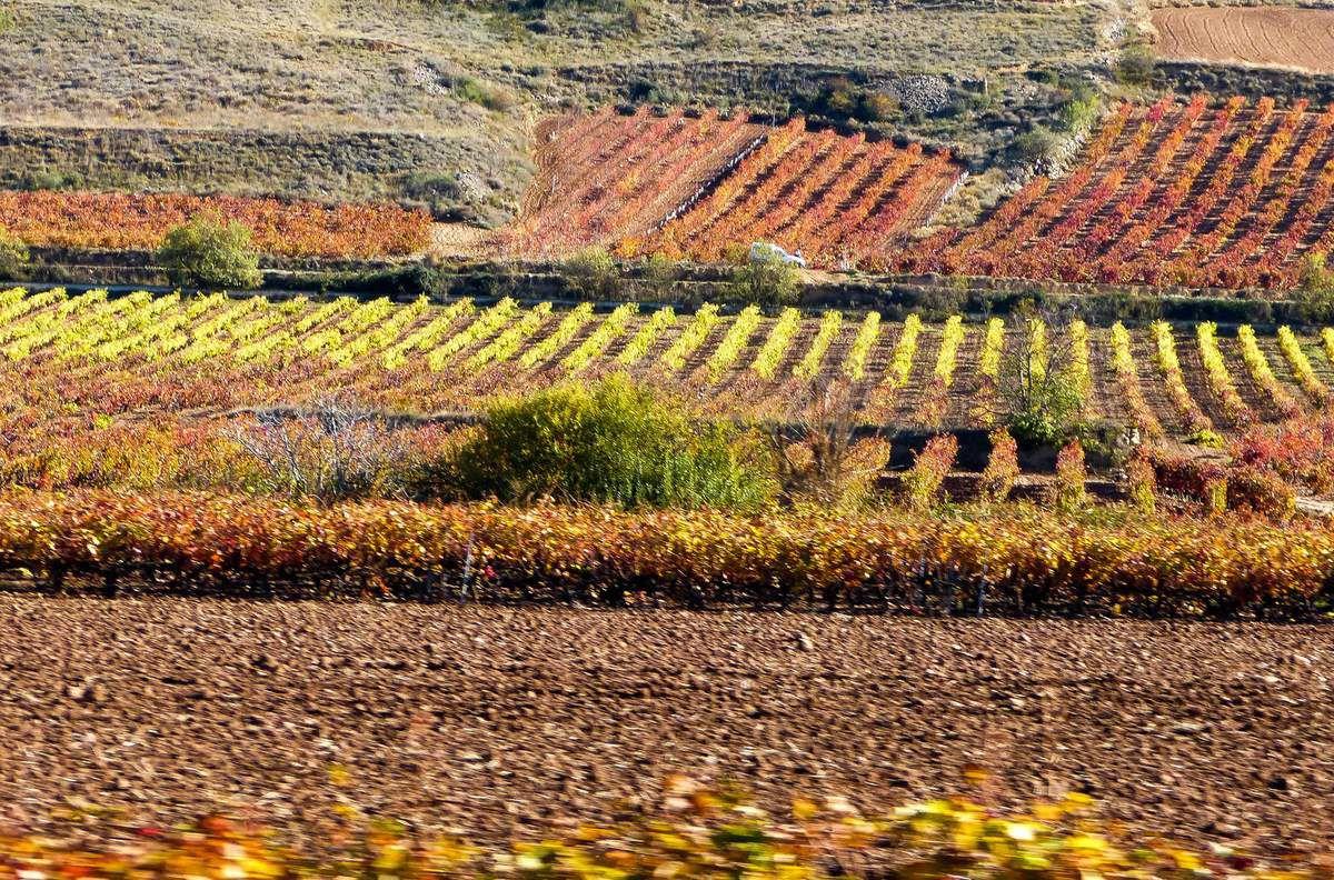 Dans la Rioja