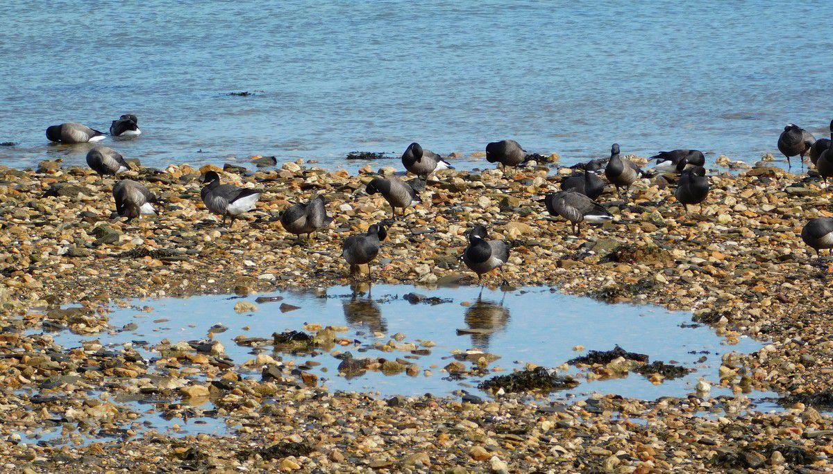 Ce matin en baie de Morlaix
