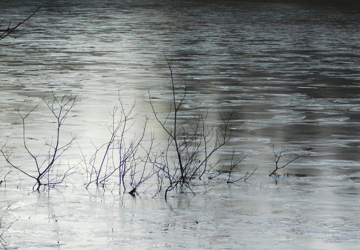 Dans les eaux gelées de l'étang du Relecq en Plounéour-Menez