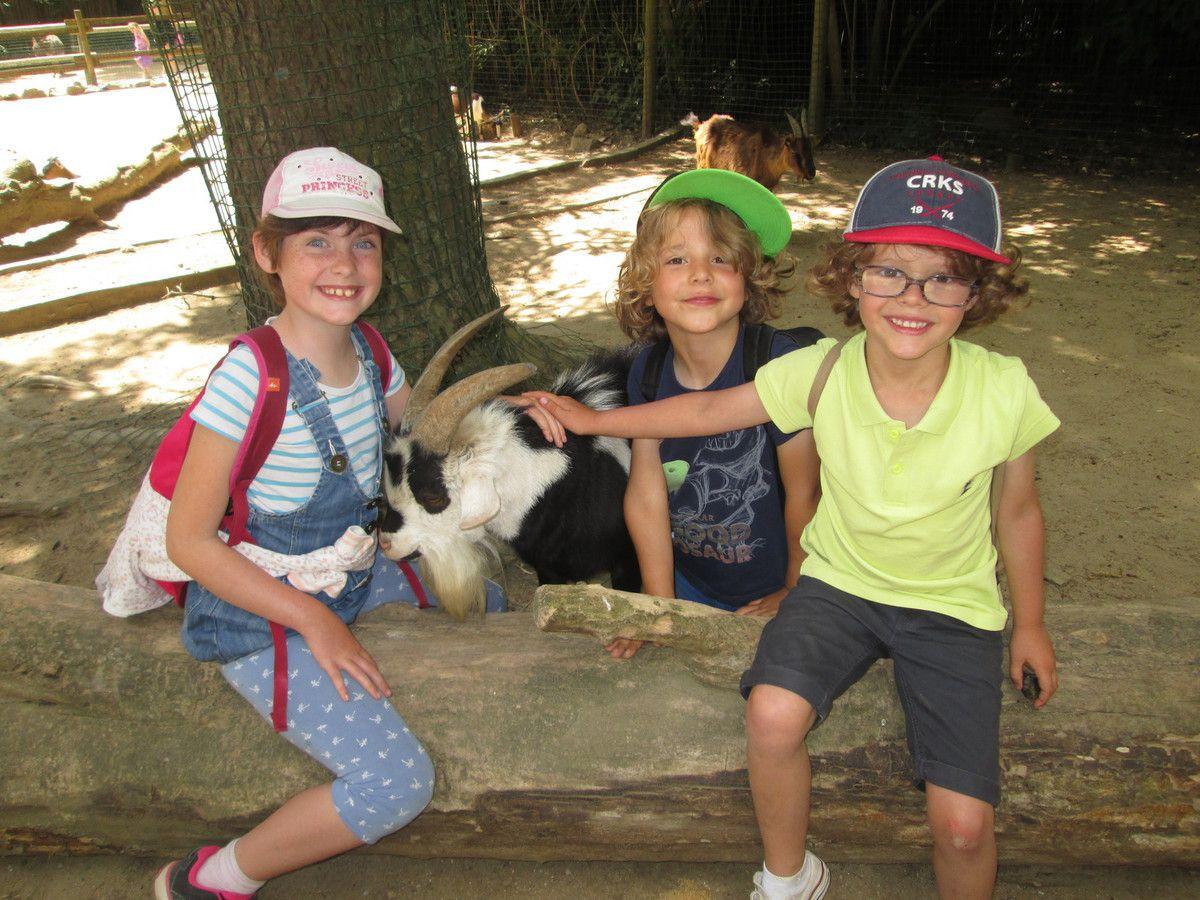 Mercredi 13 Juillet : Une super sortie au Zoo (totem 1)