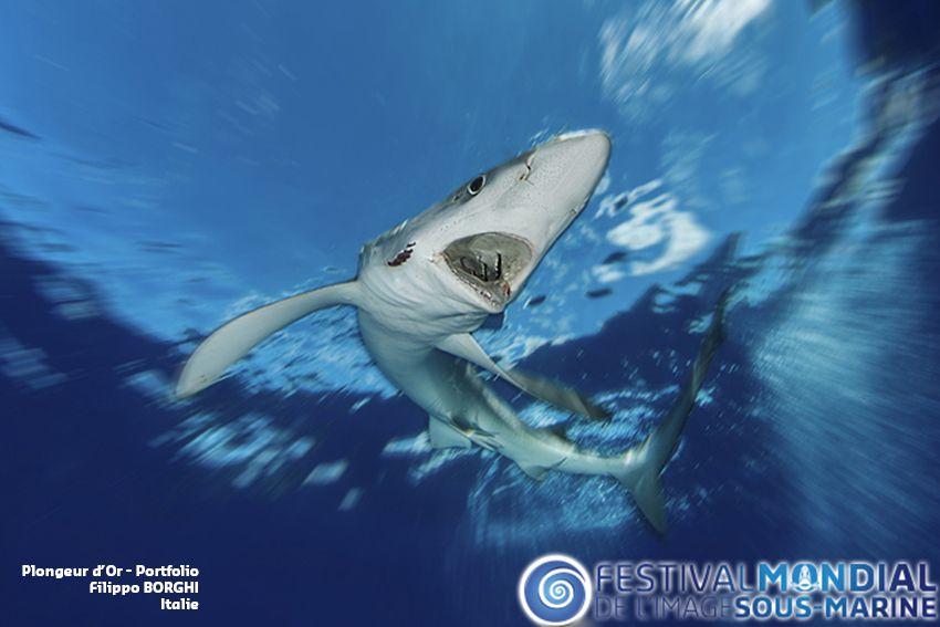 Festival de l'image du 29/10 au 1/11 : gagnez des surprises !