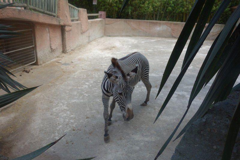 Par ici la visite du zoo de la Palmyre !