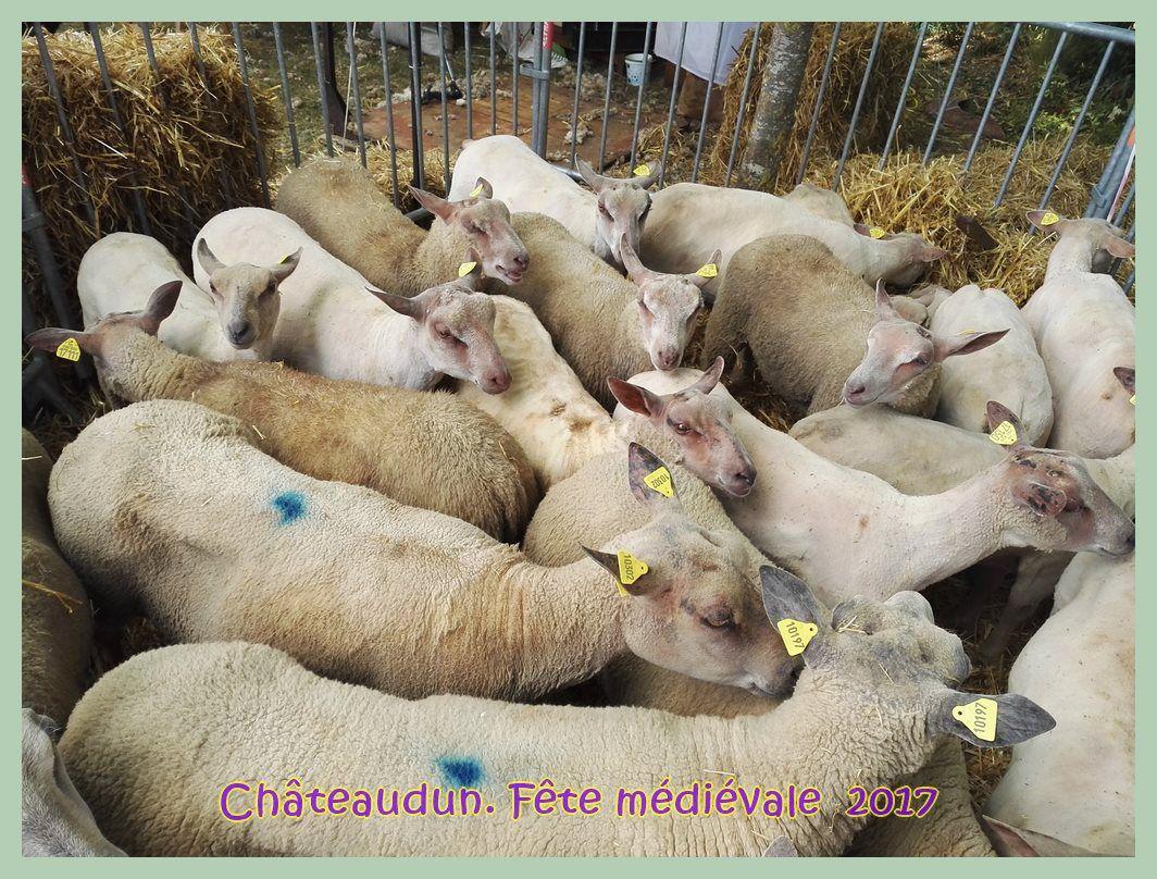 La Foire aux laines, fête médiévale à Châteaudun. 2017