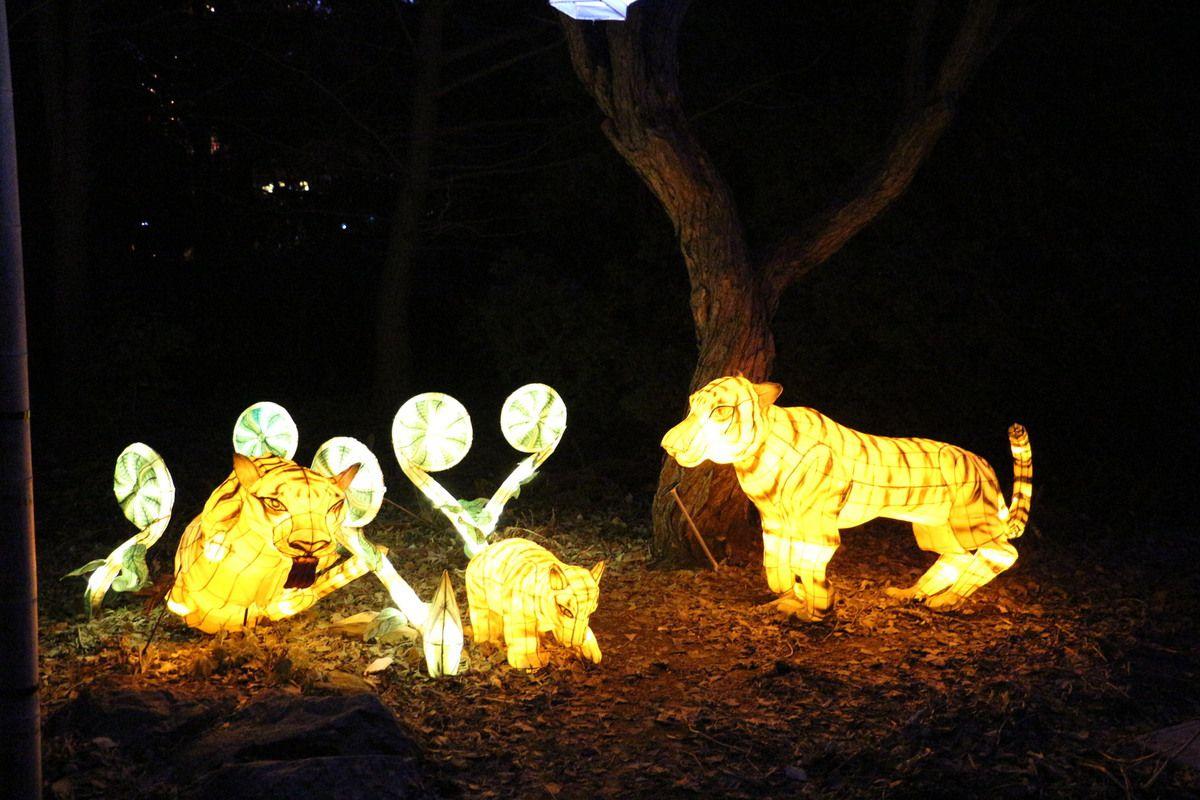 Jardins de lumière, vendredi 30 octobre 2015