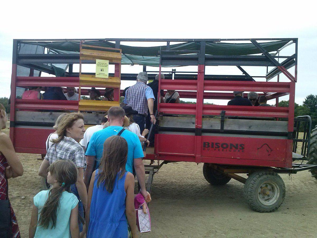 Visite des Bisons + Tir à l'arc