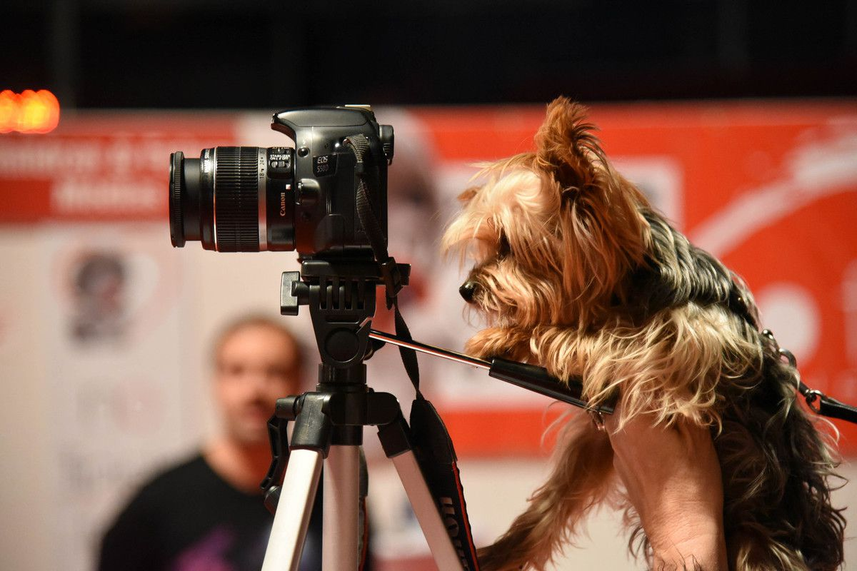 Canis Photographus