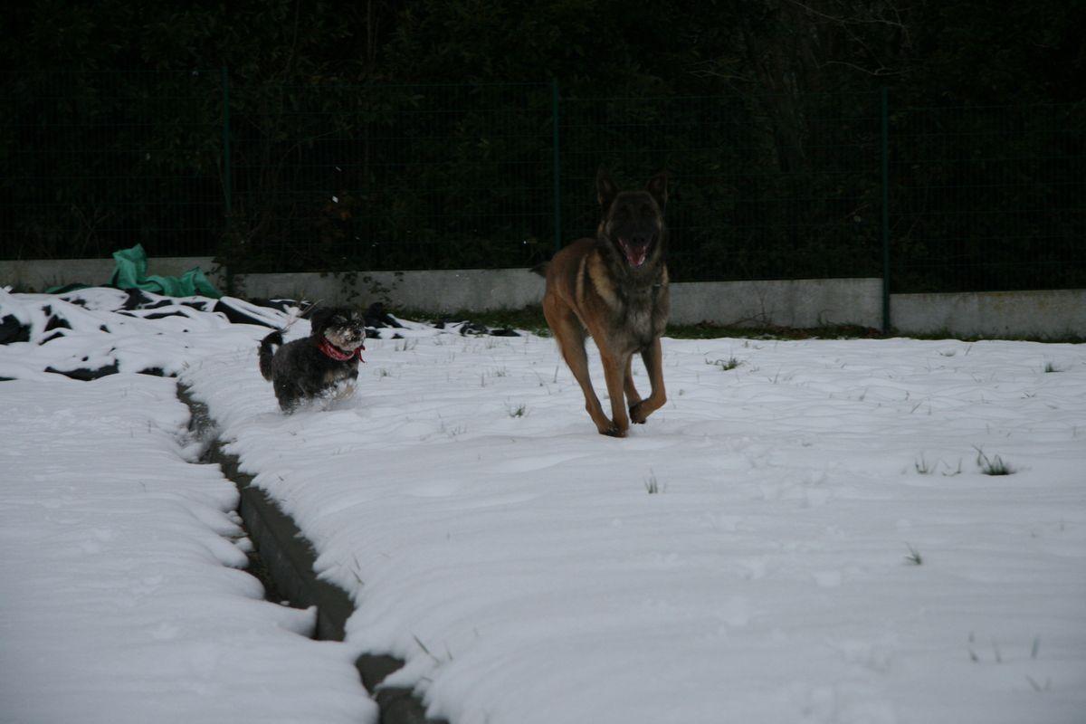 Là c'était en 2010, il neigeait fort à Saint malo, les chiens s'amusaient comme des fou