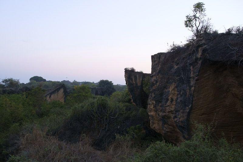 un coin de jungle à Diu