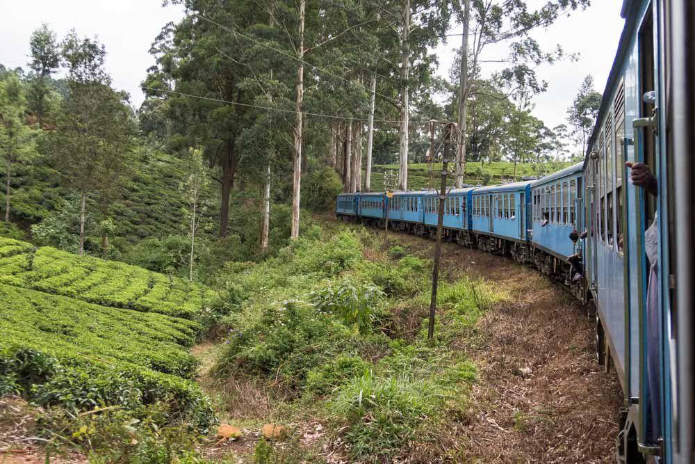 le train longe les plantations de thé