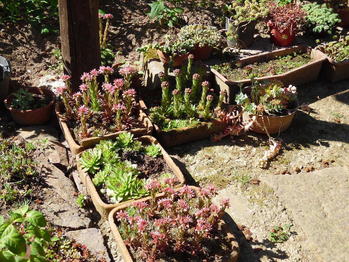 Conseils pour aout le blog du jardinier fain ant for Conseil du jardinier