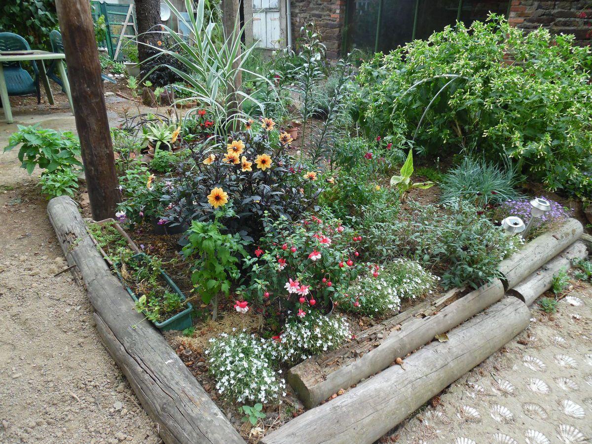 Les potées qui n'ont pas encore trouvé place en pleine terre sont enterrées dans le massif, protégées par les fleurs d'été.