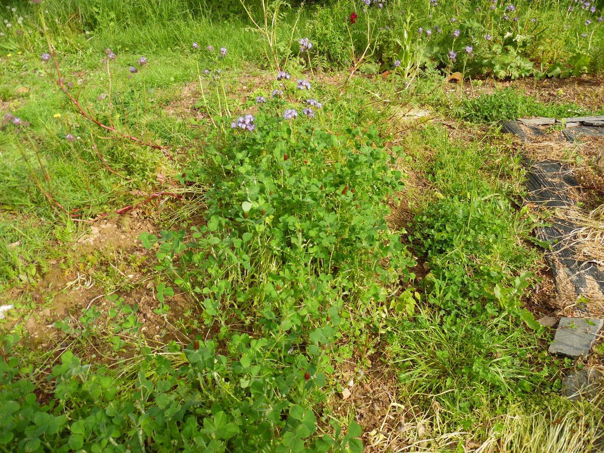 Conseils pour mai le blog du jardinier fain ant for Conseil du jardinier