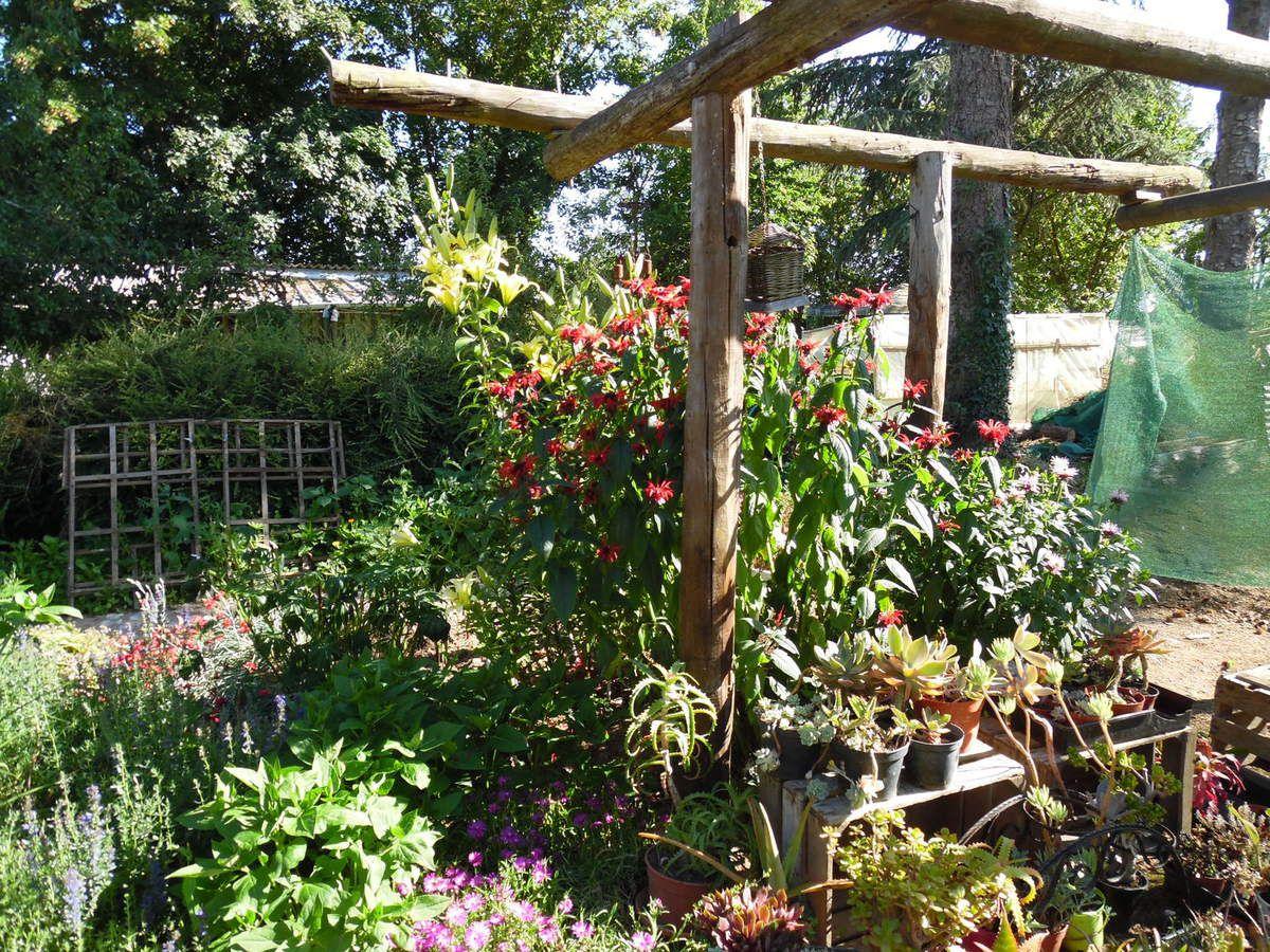 Une belle touffe de monarde rouge s'est développée près de mes lys, elle protège du vent mes plantes grasses en pot. Dans ce coin se mélangent les odeurs des lys, oeillets, lavande, aromatiques...Un coin agréable pour se détendre!