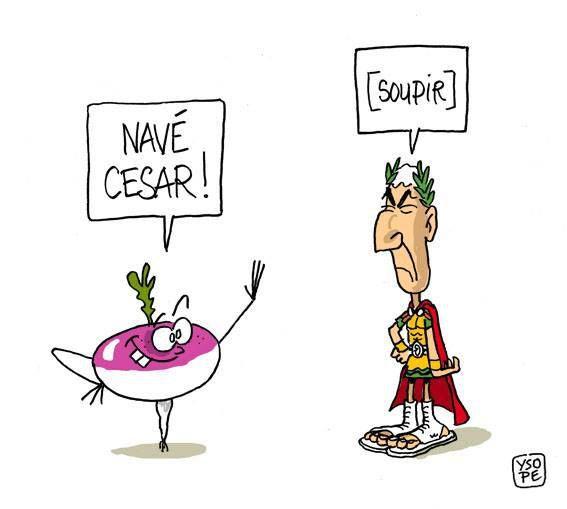 Navet César...