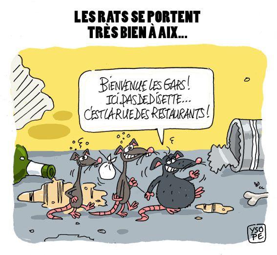 Les rats prolifèrent à Aix. Dessin pour le Courrier d'Aix