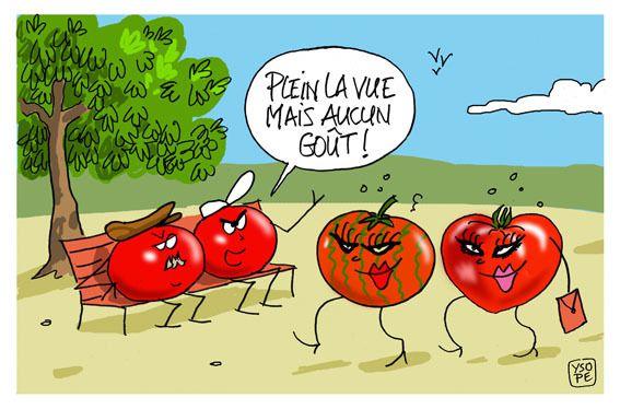 Tomates de jardin...