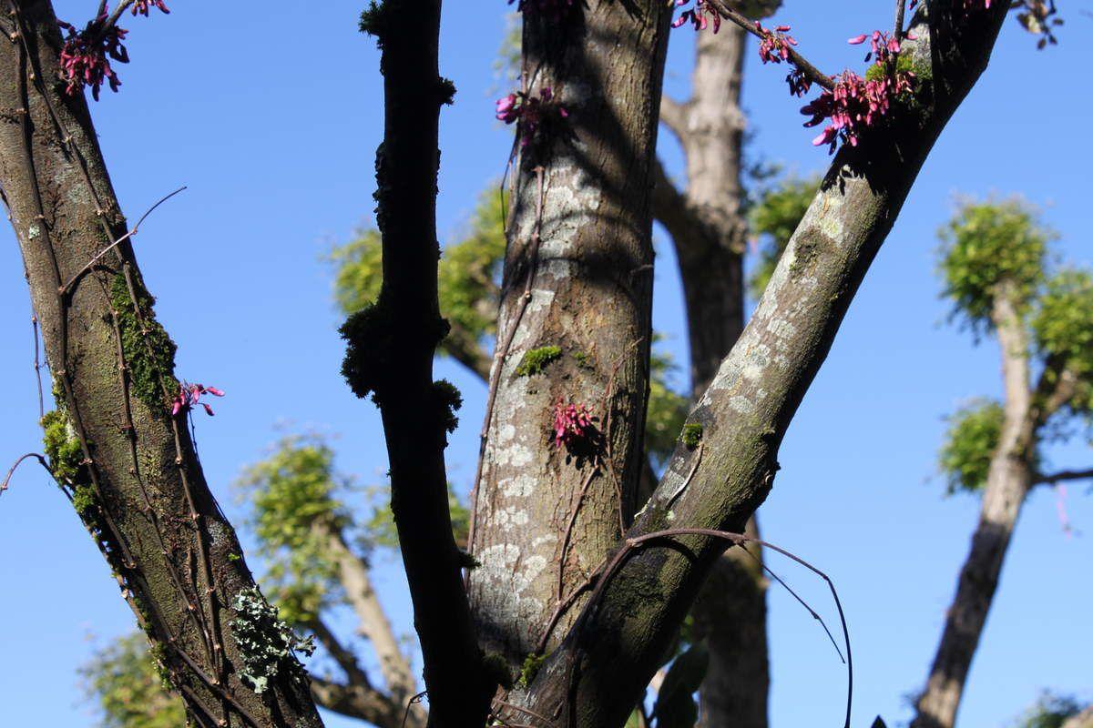 Le printemps dans le jardin de la maison des 5 sens for Jardin 44 des 5 sens