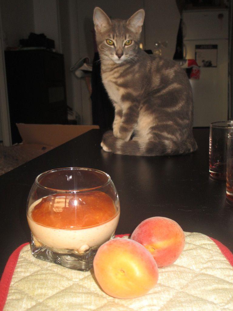 Mousse abricot yuzu