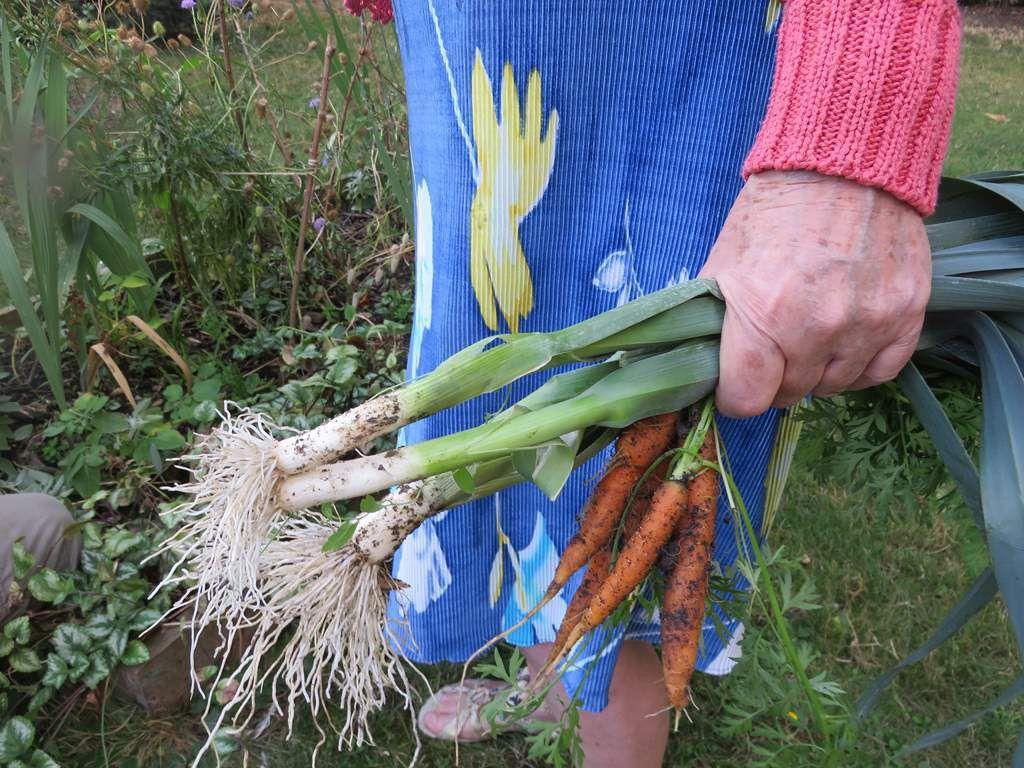 Reprise des ateliers de jardinage _ foyer résidence Les Tourelles