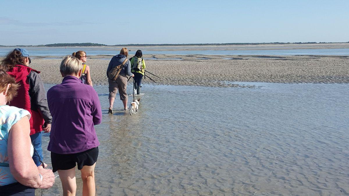 Traversée de la Baie de Somme à marée basse avec un guide expérimenté.