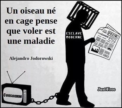 """Grands médias : """"Contre pouvoir"""", non """"Chiens de garde"""" !"""
