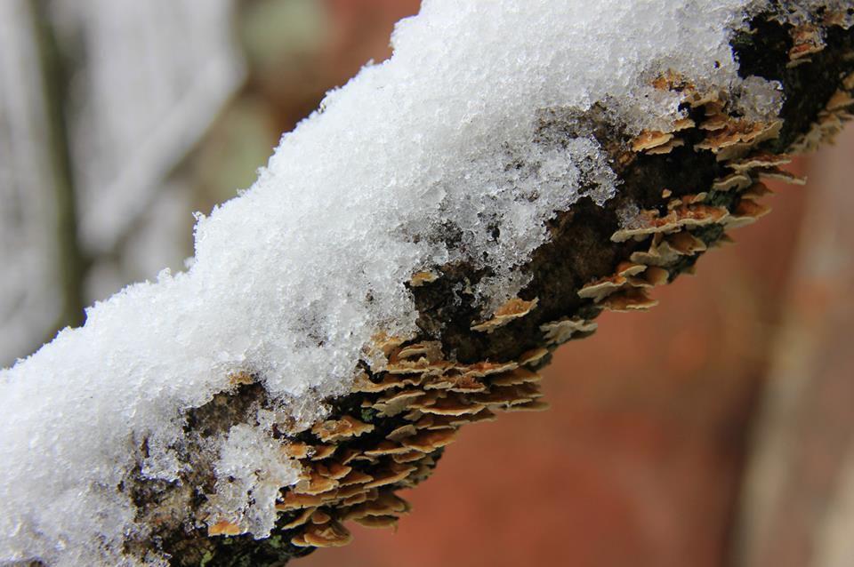 Sortie hivernale dans les Vosges grèseuses
