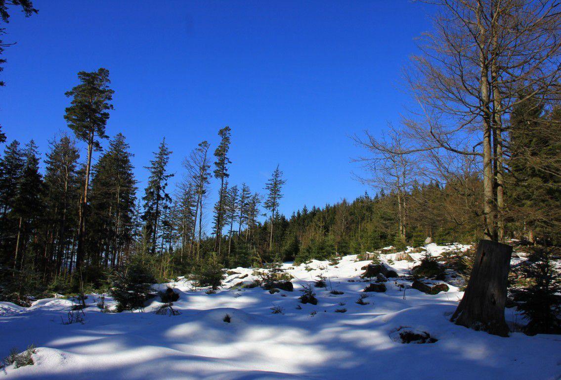 Sur les sentiers enneigés de l'Ordon des Grands Bois