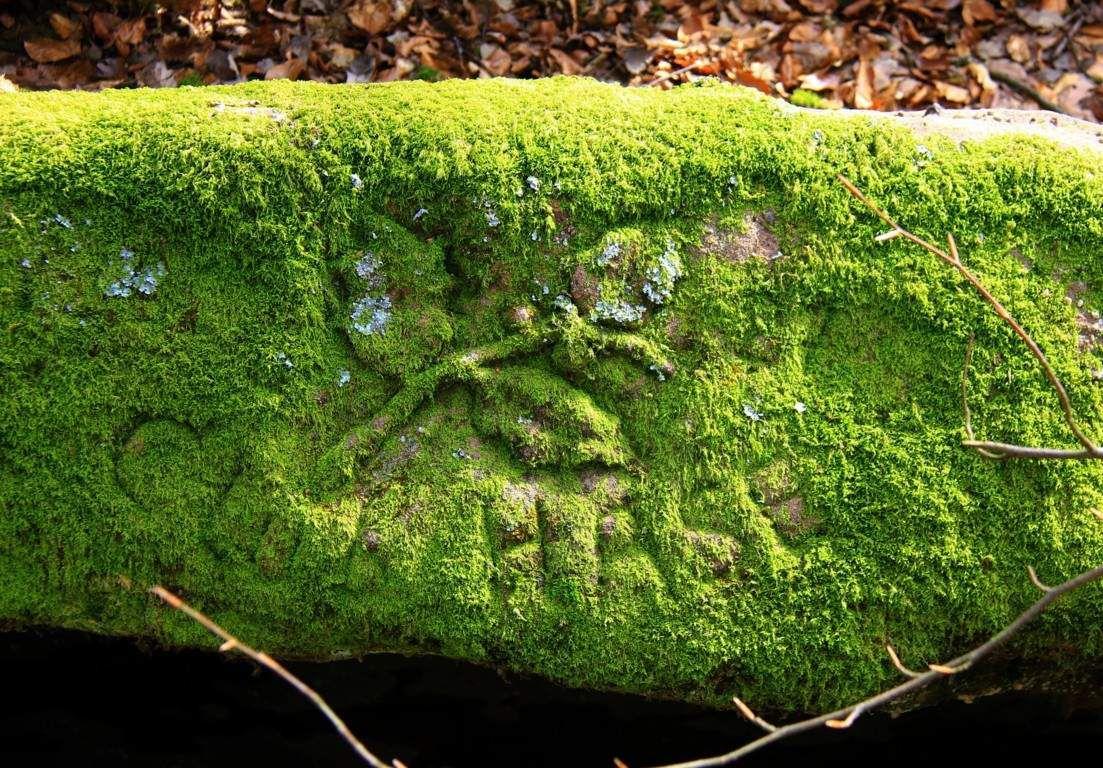 Balade dans le bois d'Ottersthal