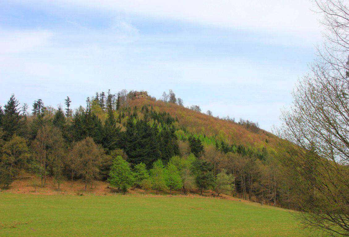 Les ruines du château d'Ochsenstein dominent le Schlossberg.