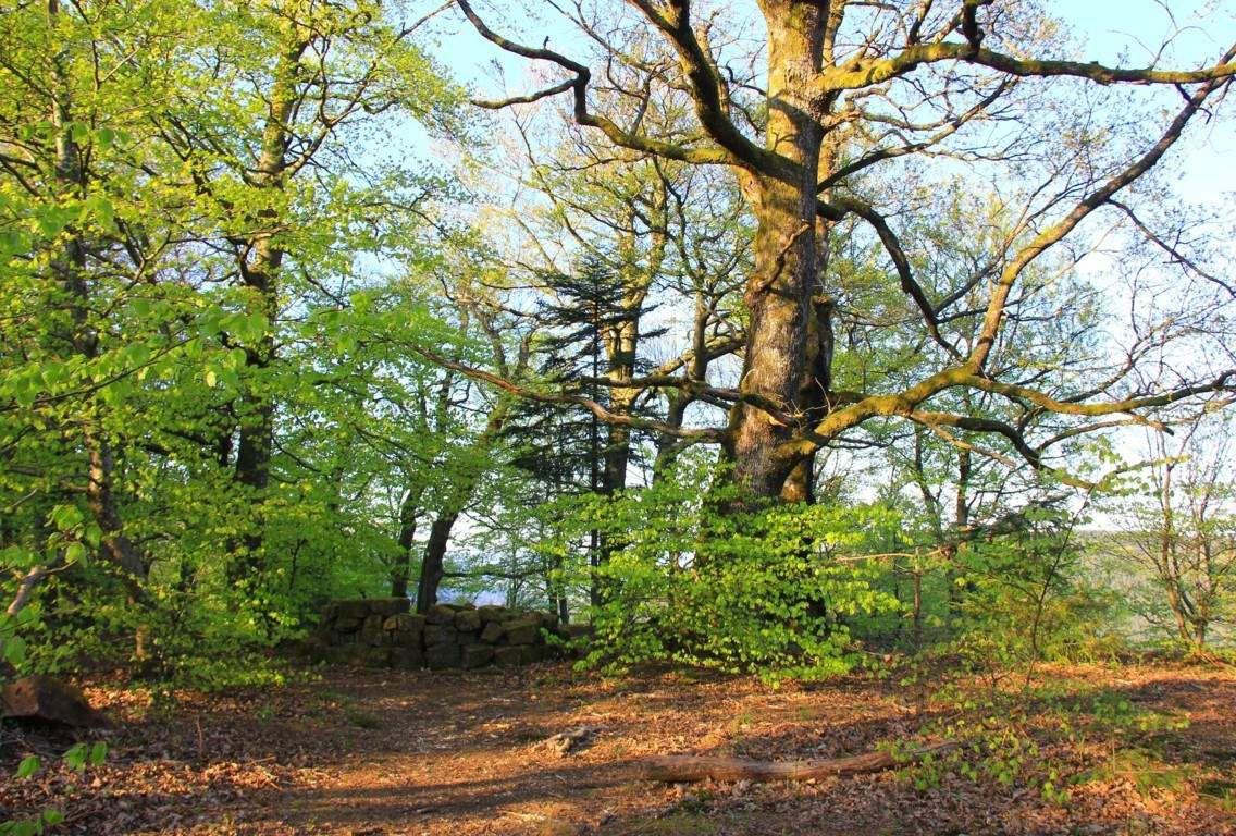 Wuestenberg, forêt de légendes