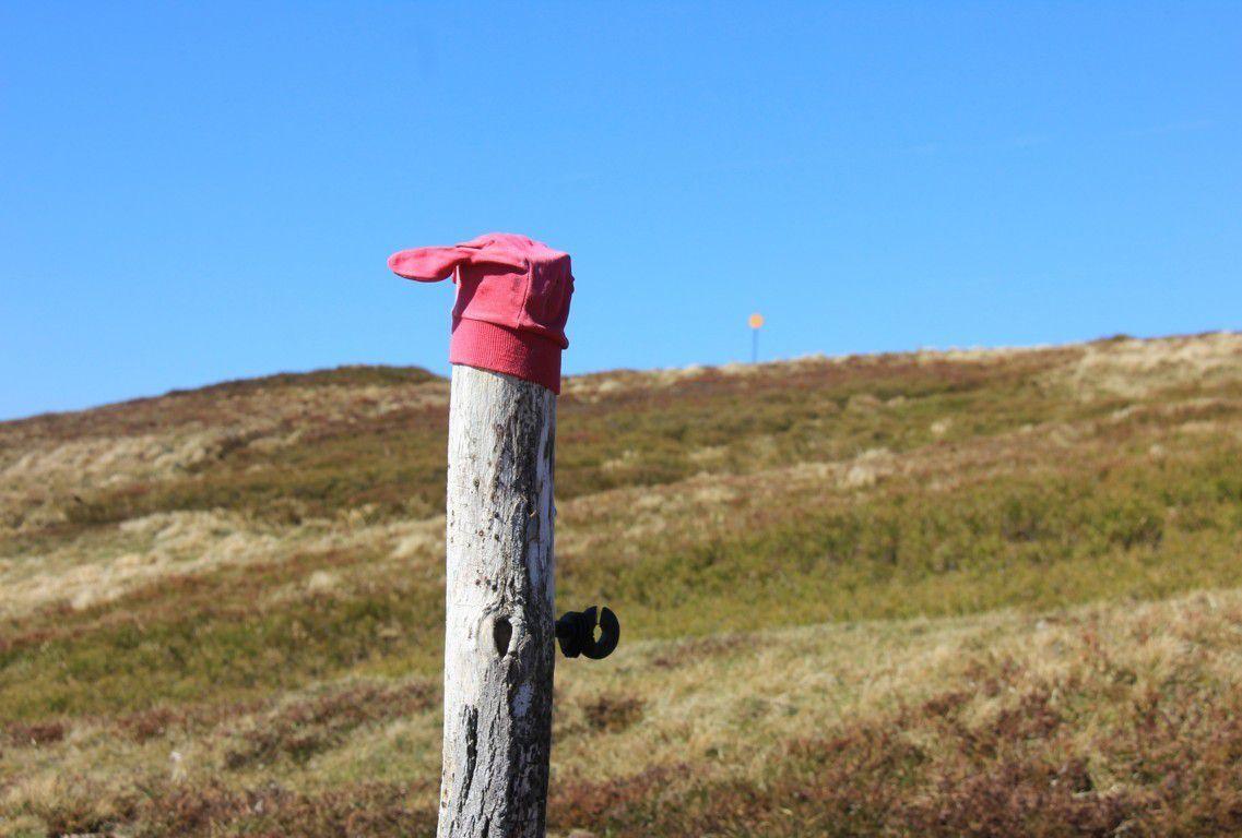 Des gants et des bonnets coiffent les poteaux, oubliés lors de la saison hivernale...