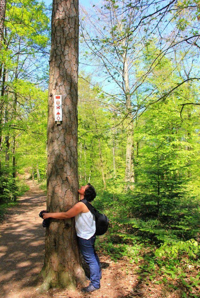 Renaissance en forêt de Saverne