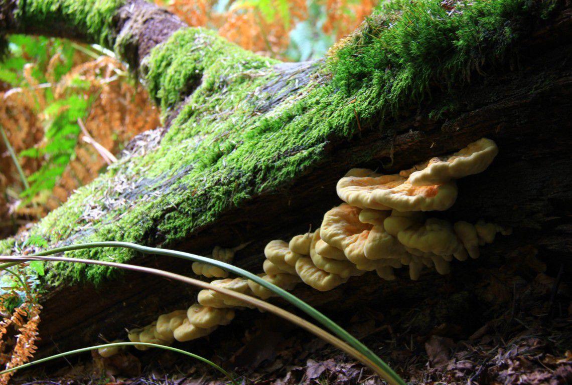 C'est l'automne, la saison des champignons !