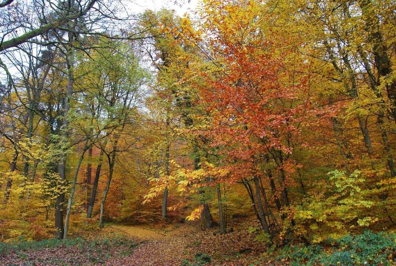 La forêt se pare de belles couleurs.