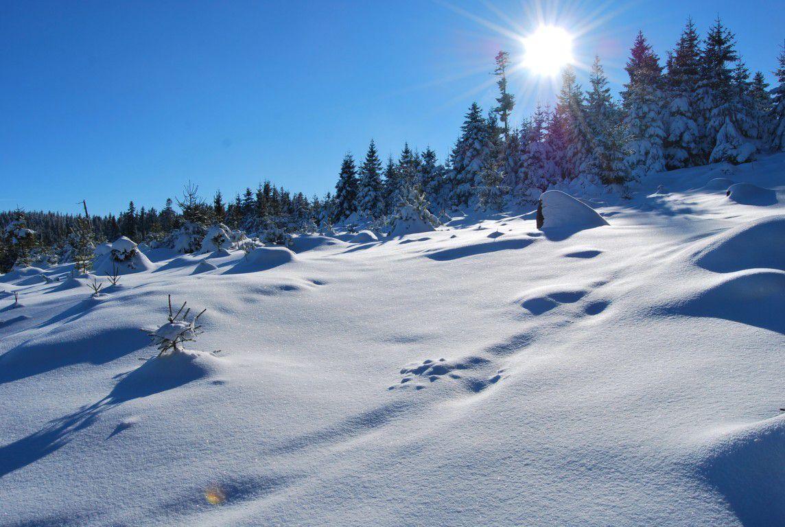 50 centimètres de neige fraîche !