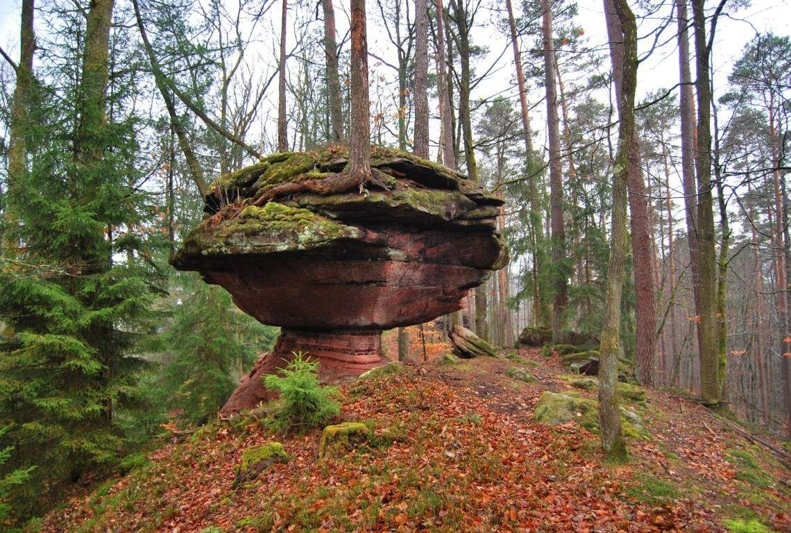 Un calice dans la forêt de Gauchshardt.