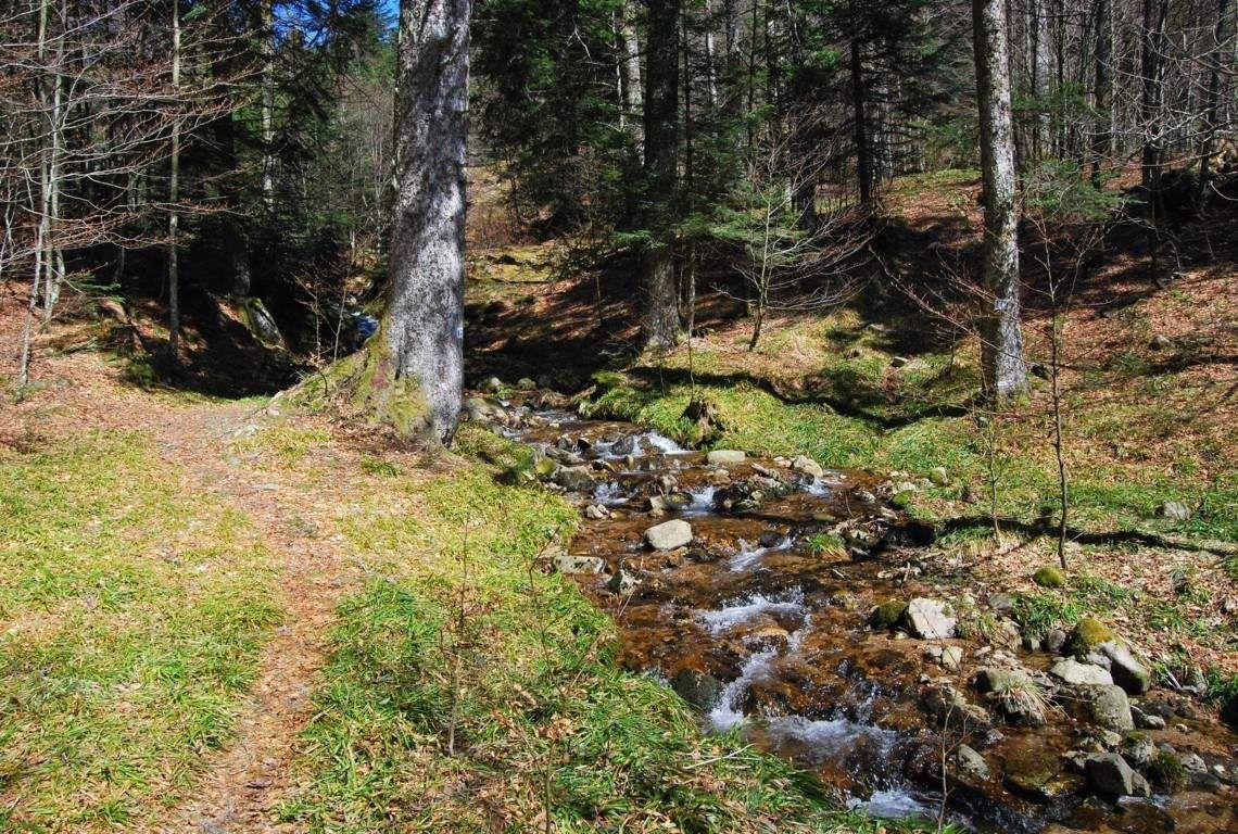 Un petit sentier court le long d'un ruisseau de montagne.