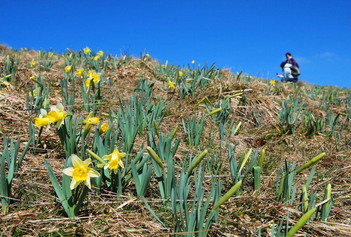 C'est enfin le printemps dans nos montagnes !