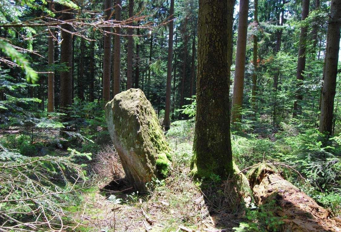 Une pierre levée dans la forêt