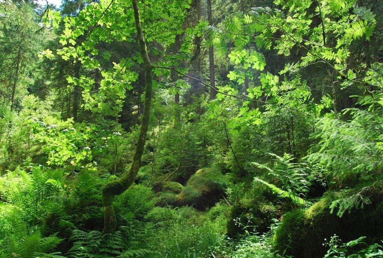 Il ne manque plus que les cris de singes ou d'oiseaux exotiques et on pourrait s'imaginer dans une forêt tropicale ...